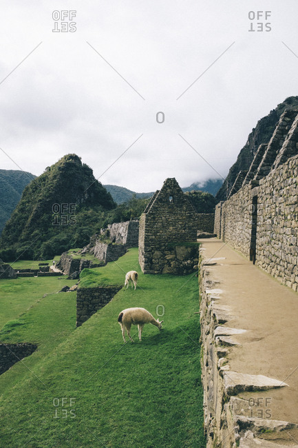 High angle view of llamas at old ruins against cloudy sky