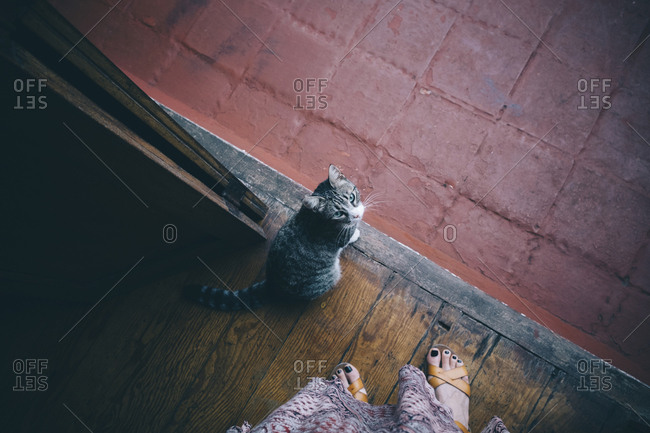 Low section of woman by cat standing on wooden floor