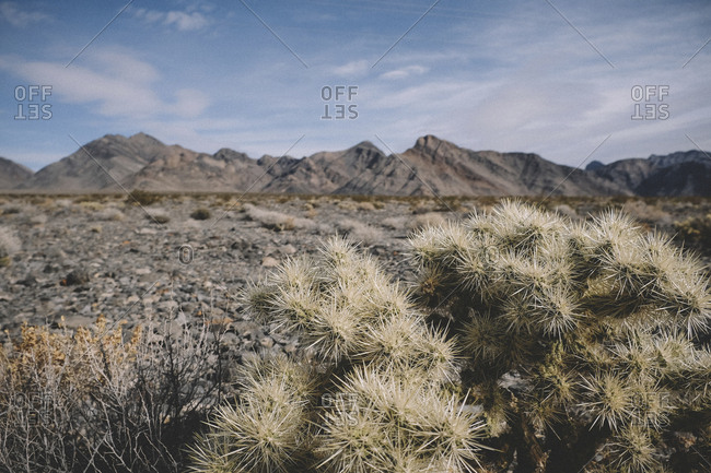 Tranquil view of mountains against sky with cactus in foreground at desert