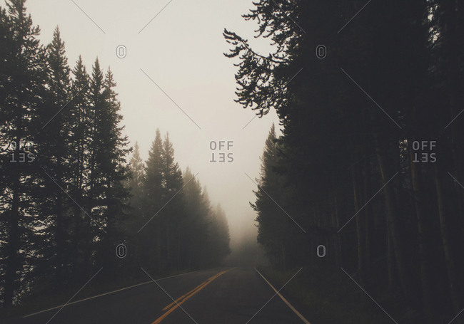 Empty road amidst silhouette trees in forest during foggy weather