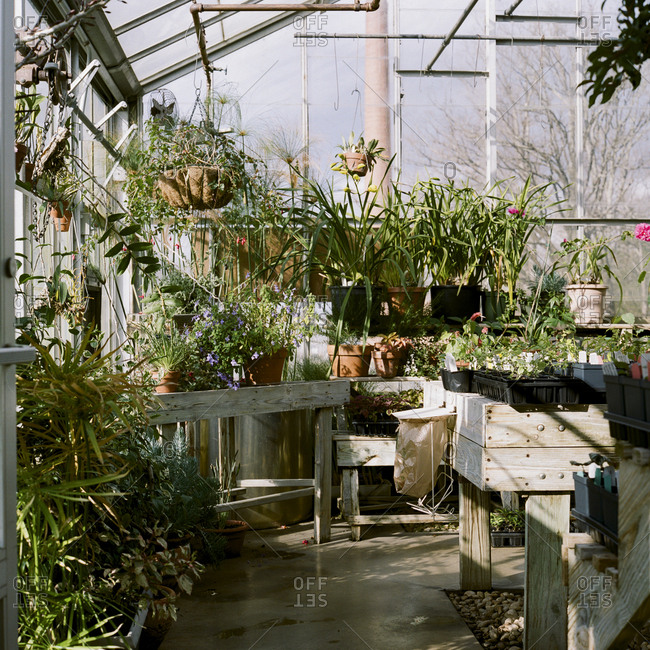 Greenhouse full of potted indoor plants