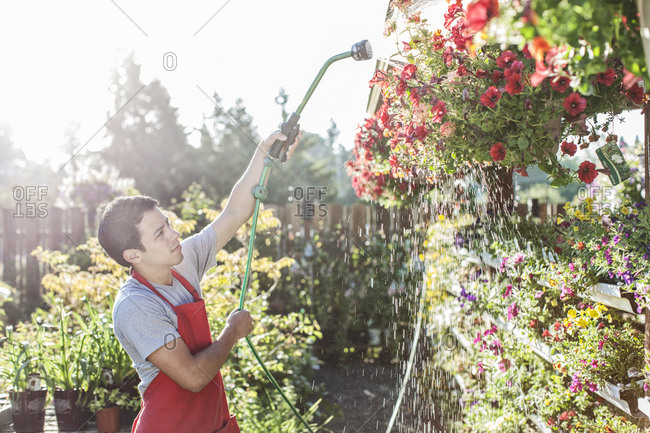 Caucasian man employee watering plants at a garden center nursery.