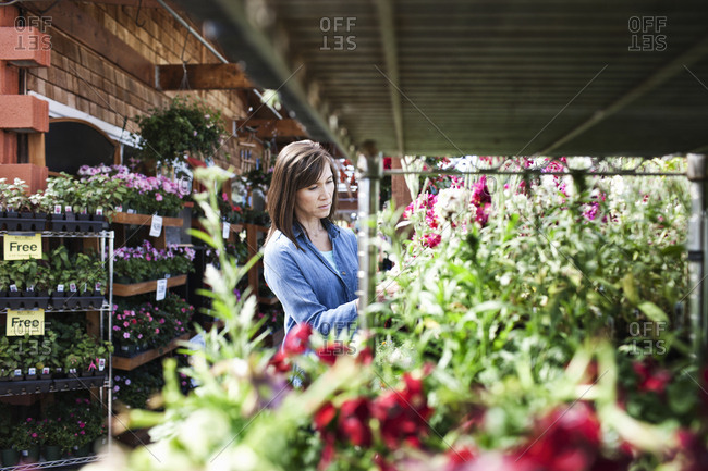 Caucasian woman checking on plants in a garden center nursery.