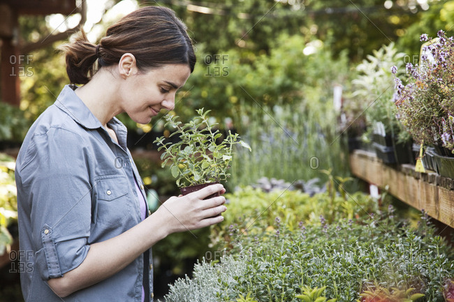 Caucasian woman holding a small plant, an aromatic herb and smelling it, shopping at a garden center nursery.