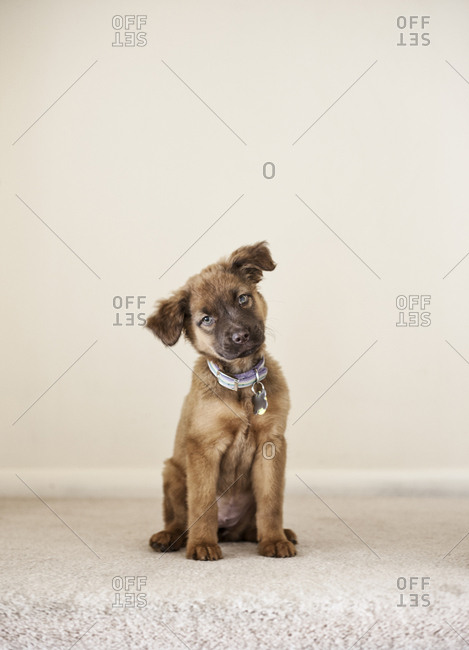Portrait of a mixed breed puppy/mutt.