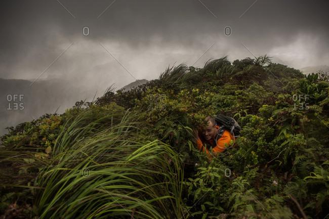 Man hiking at Ko'olau Mountain Range, Honolulu, Oahu, Hawaii Islands, USA