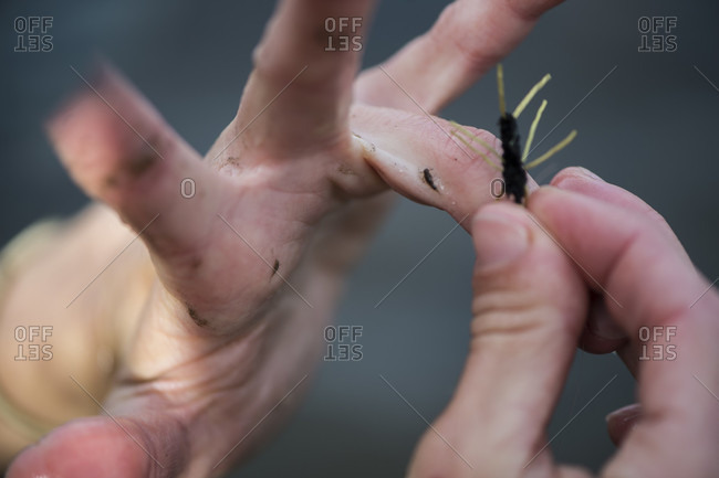 Close up of female anglers hands comparing fly to insect from mud on shore, Colorado River, Silverthorne, Colorado, USA