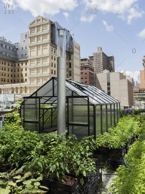 Small green house on ground level of Alexandria Center in Manhattan, New York, USA
