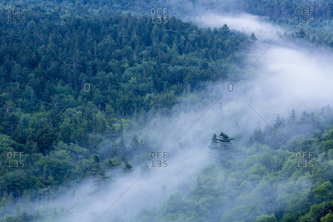 Forest in fog in Acadia National Park, Maine, USA