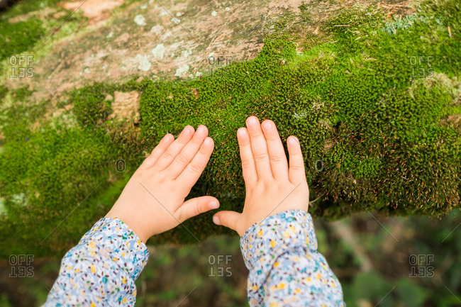 Close up of little hands touching moss growing on log