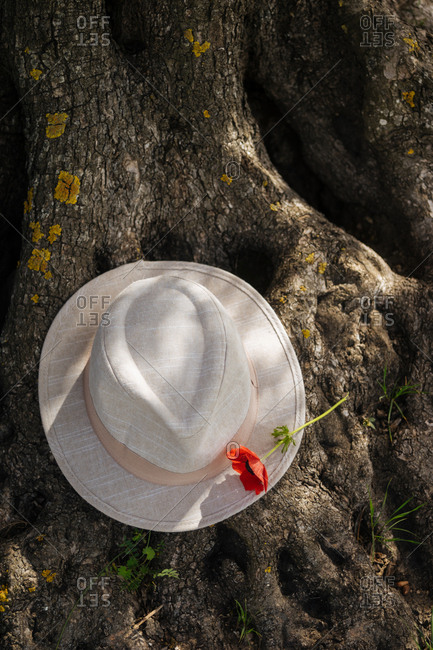 Discarded hat on tree with flower