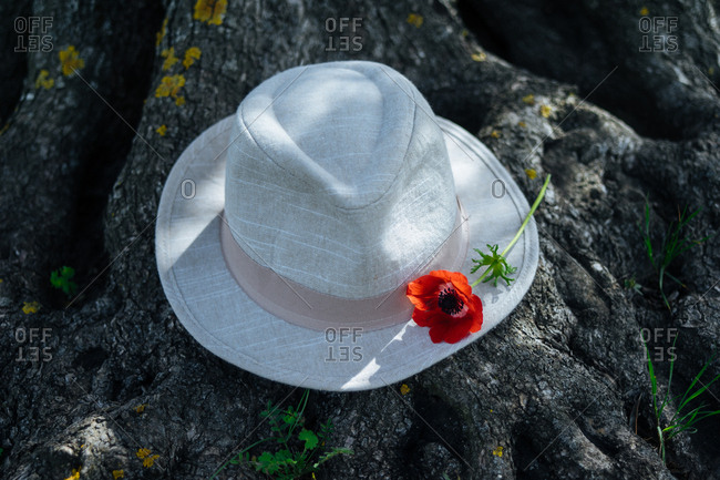 Fedora hat with flower on brim in the woods