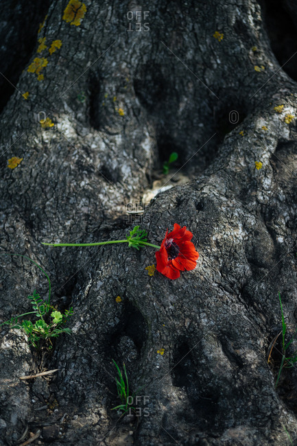 Single flower laying on tree trunk