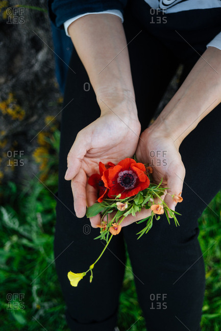 Cupped hands holding bundle of fresh picked flowers