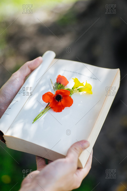 Bright flowers on top of book page