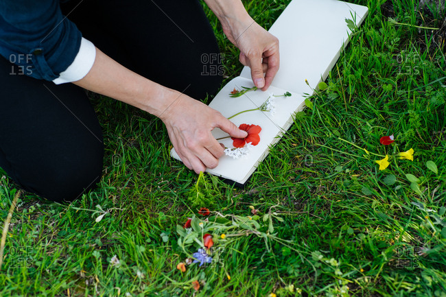 Hands pressing flowers into blank page