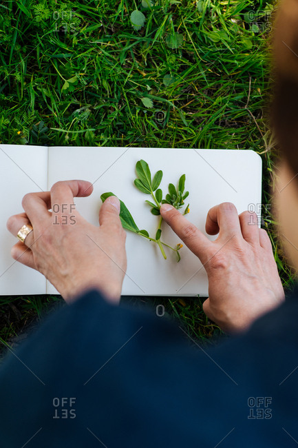 Over shoulder view of woman arranging plant for book pressing