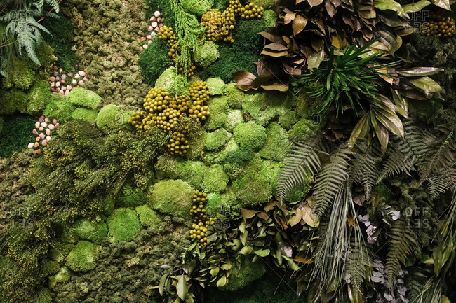 Overhead view of moss, ferns and other vegetation used in interior design