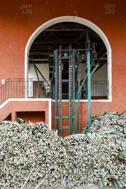 Harvested Agave leaves stacked up outside processing plant in Yucatan, Mexico