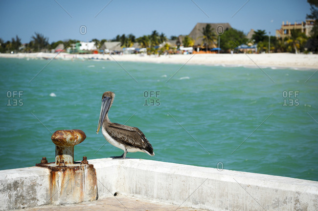 Pelican perched on pier with sea and beach in the background in Celestun, Mexico