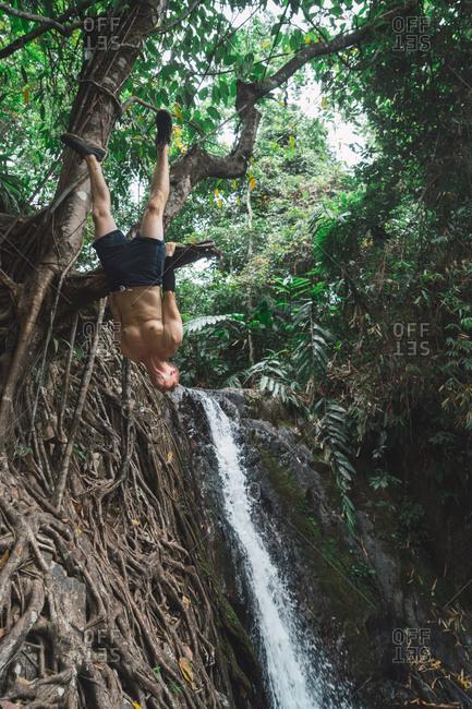 Cheerful man hanging on tree