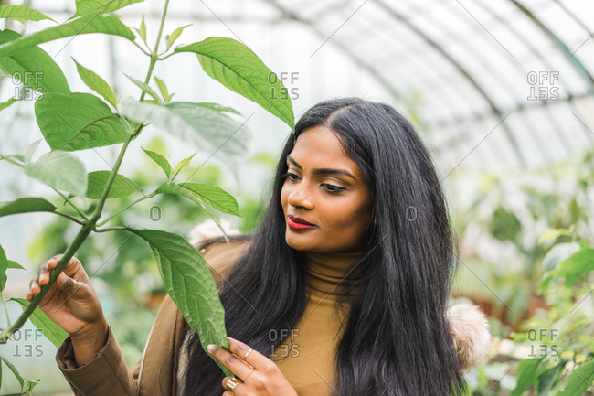 Pretty young Indian woman standing and closing face with green leaf in hothouse.