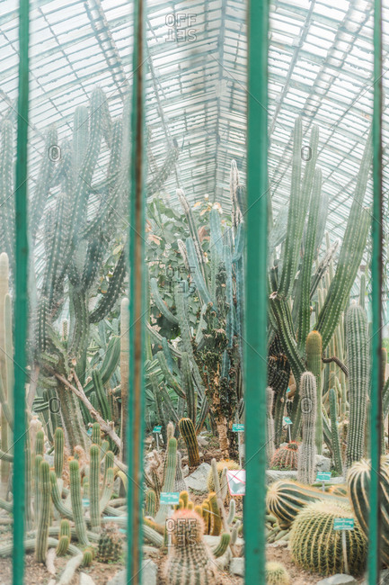 Different green spiky cacti growing in the hothouse.