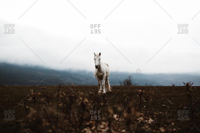 White horse in hillside