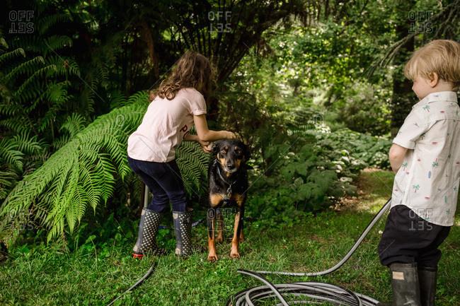 Children washing their pet dog together