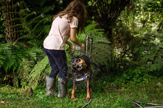Girl washing wet dog shaking water off
