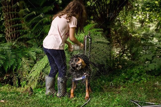 Girl washing wet dog shaking water off