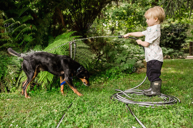 Boy spraying water from hose on black dog