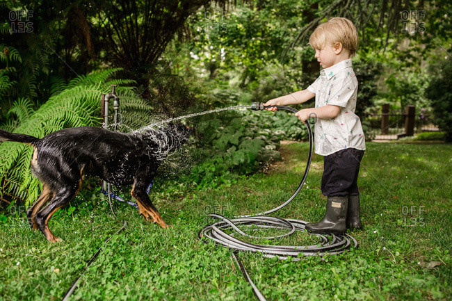Boy washing wet dog shaking water off