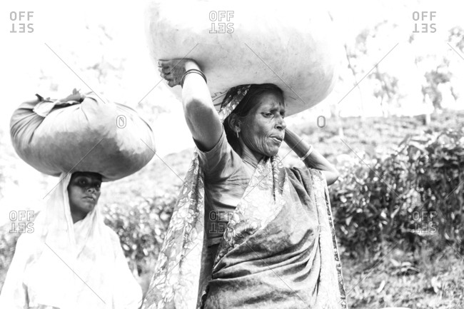 Rural Bangladesh, Bangladesh - May 3, 2013: Two women carrying heavy bags with tea on their heads