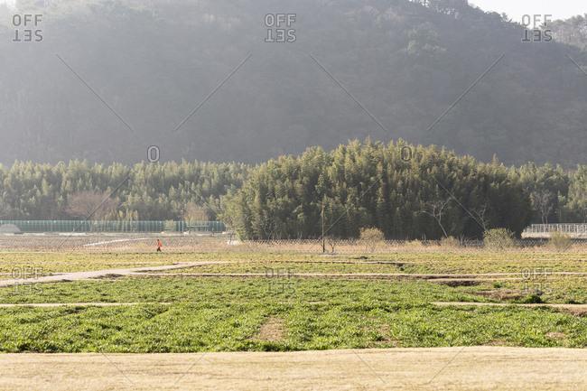 An man in orange walks in a bamboo park