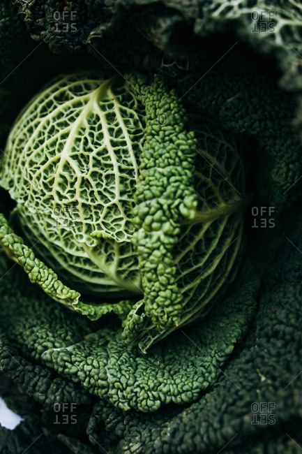 Close-up of a whole cabbage