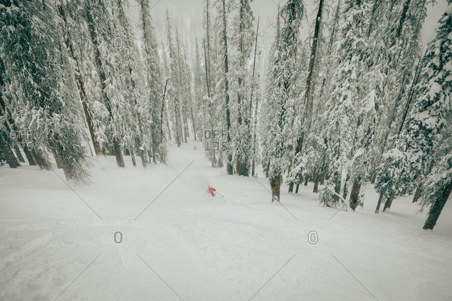 Downhill skier in a snowy forest