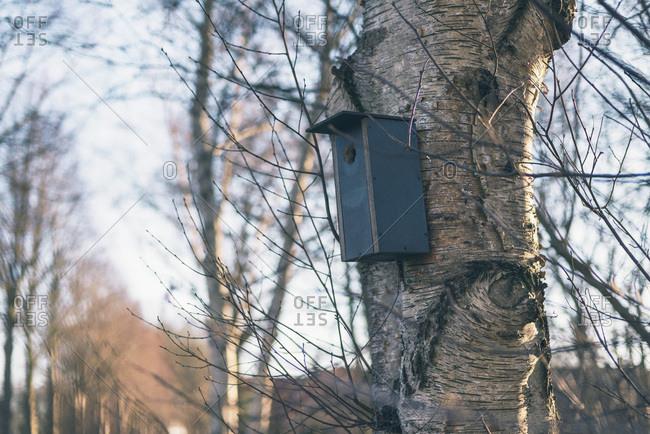 Vintage wooden birdhouse hanging in tree