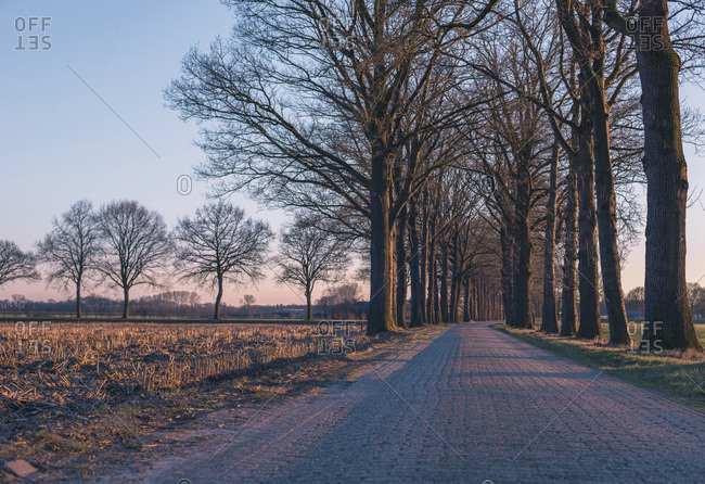 Country road with bare winter trees in low evening sunlight