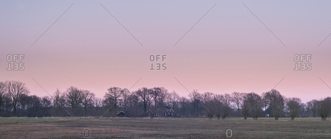 Pasture with winter trees and pollard willows under pink sunset sky