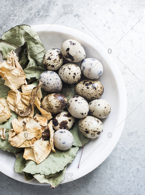 Quail eggs on dried flower leaves in a marble bowl