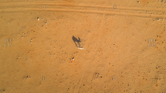 Aerial view of a camel in the desert of Sharjah, UAE