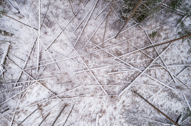 Aerial view of a logging in the forest under the snow in Estonia