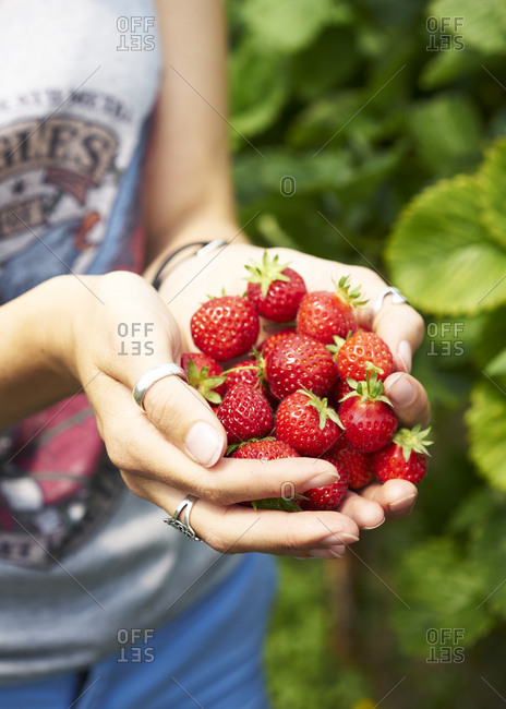 Young woman holding out handful of ripe strawberries