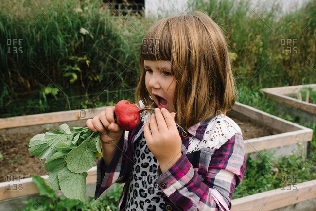 Little girl pretending to chomp down on radish grown in garden