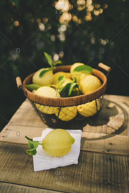 Fresh picked bundle of lemons on wooden table