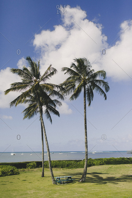 Oceanfront resort grounds with picnic table surrounded by tall palm trees
