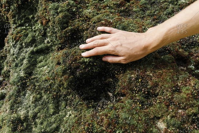 Close up of woman's hand touching moss growing on a rock in Bali, Indonesia