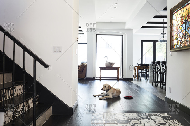 Los Angeles, California, USA - March 9, 2018: Dog sitting on floor in hallway at base of staircase