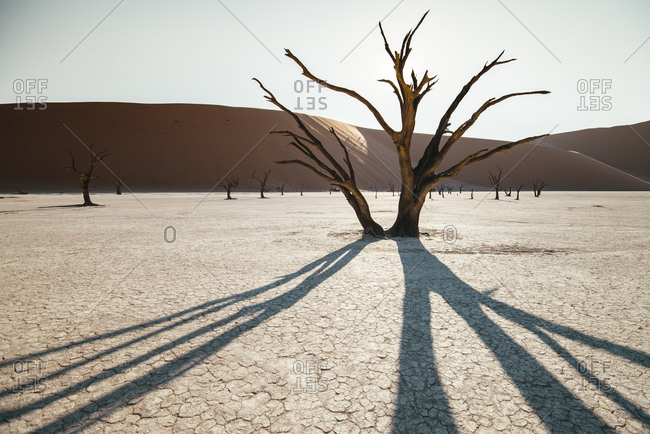 A surreal landscape of dead trees in a clay pan and large sand dunes